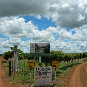 画像3: ブラジル「パンタノ農園 〜セラード ブルボン・クラシコ〜」(250g袋入)