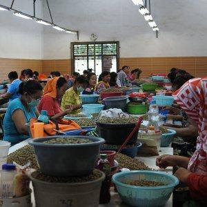 画像1: 【お試し買い】インドネシア「マンデリン 〜ビンタン・リマ〜」(100g袋入)